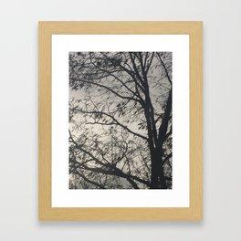 The Barren Tree Framed Art Print