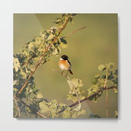 European Stonechat   Bird Photography Metal Print