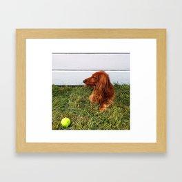 Long-haired Dachshund Framed Art Print