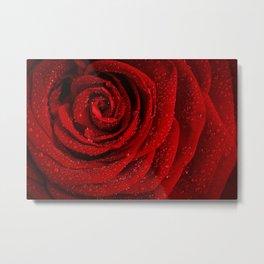 Red Rosa Metal Print
