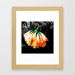 Clivia Cluster Framed Art Print