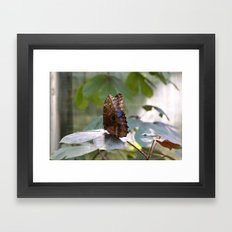 Butterfly Blue Framed Art Print