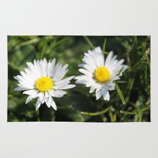 wild white daisy flowers. floral photography. Rug