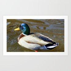 The Duck Art Print