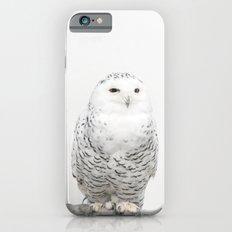 Snowy Owl iPhone 6s Slim Case