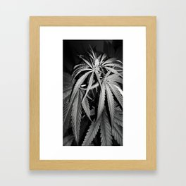 The discovered beauty Framed Art Print