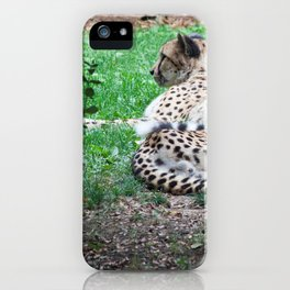 Still Cheetahs iPhone Case