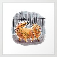 pomeranian Art Prints featuring Pomeranian  by Renee Kurilla