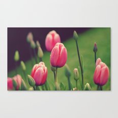 Row of Tulips  Canvas Print