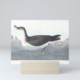 Manks Shearwater by John Audubon Mini Art Print
