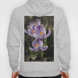 Crocuses Hoody