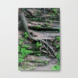 root growth. Metal Print