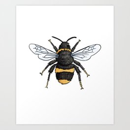 Bumble Bee Insect Illustration Art Print