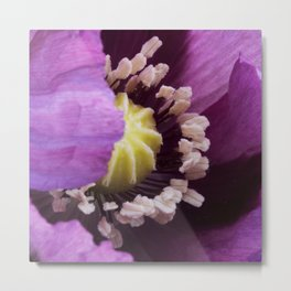 Hungarian Blue Bread Seed Poppy | Close Perspective Metal Print