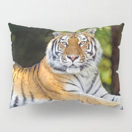 Impressively Noble Adult Tiger Looking At Camera Close Up Ultra HD Pillow Sham