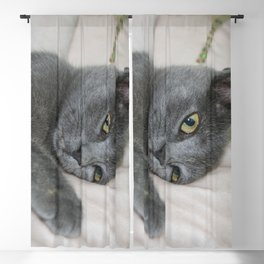 Russian Blue Kitten Relaxed On A Bed Blackout Curtain