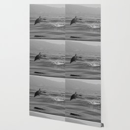 Black and white dolphin race in the ocean Wallpaper