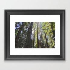 Sunlight through the trees Framed Art Print