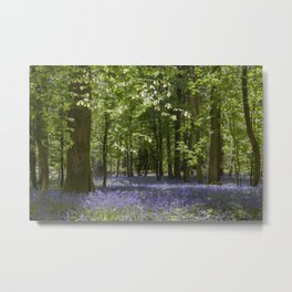 Bluebell Glade 3 Metal Print