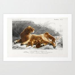 Fails Leo illustrated by Charles Dessalines D Orbigny (1806-1876) Art Print