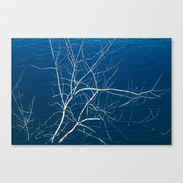 River Branch Canvas Print