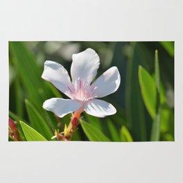 Oleander 134 Rug