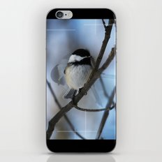 Black Capped Chickadee In Motion  iPhone & iPod Skin