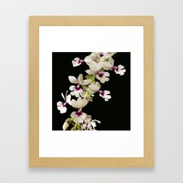 Calanthe rosea Orchid Framed Art Print