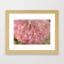 Tropical Hydrangea Framed Art Print