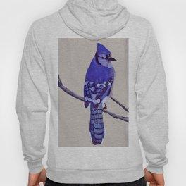 Blue Jay Bird Hoody