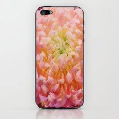 Chrysanthemum-Pink/Red iPhone & iPod Skin