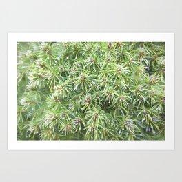 Spring Rain on Spruce Needles Art Print