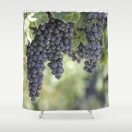 black grape grows on vineyard Shower Curtain