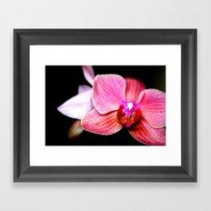 Orchid 3 Framed Art Print