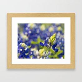 Blu Pasture Framed Art Print