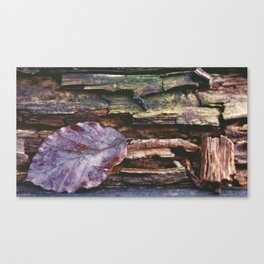 weathering collection #3 Canvas Print