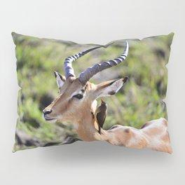 Wildlife Gossip Pillow Sham