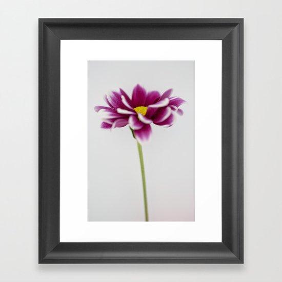 Chrysanth Framed Art Print