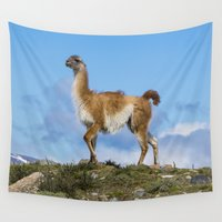 chile Wall Tapestries featuring A Guanoco, in Patagonia, Chile. by davehare