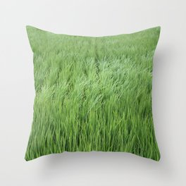 A rice field on a windy day Throw Pillow