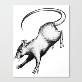 Stray Rat Canvas Print