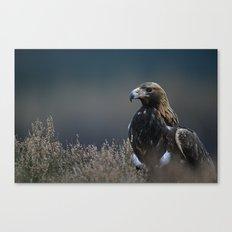 GOLDEN EAGLE STARE Canvas Print