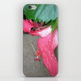 Pink Belle iPhone Skin