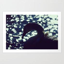 Early Swan Lake - Fine Art Nature Photography Art Print