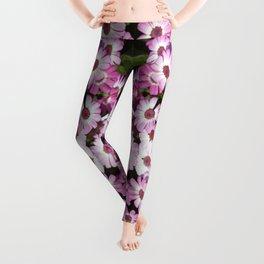 Cineraria Pink Leggings