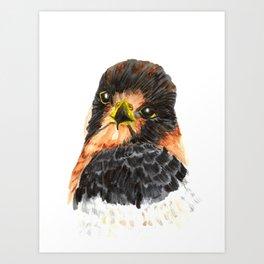Glamour Falcon Art Print