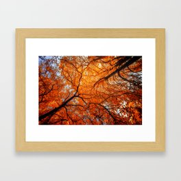 Sky Roots in Forest Red Framed Art Print