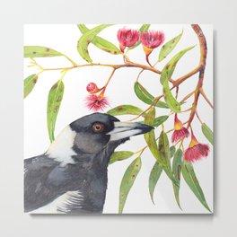 Australian Magpie and eucalyptus blossoms watercolour painting Metal Print