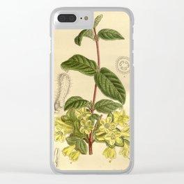 Lonicera chaetocarpa 1919 Clear iPhone Case