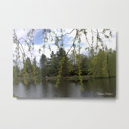 Soft willow tree branches by water pond in a garden.  Metal Print